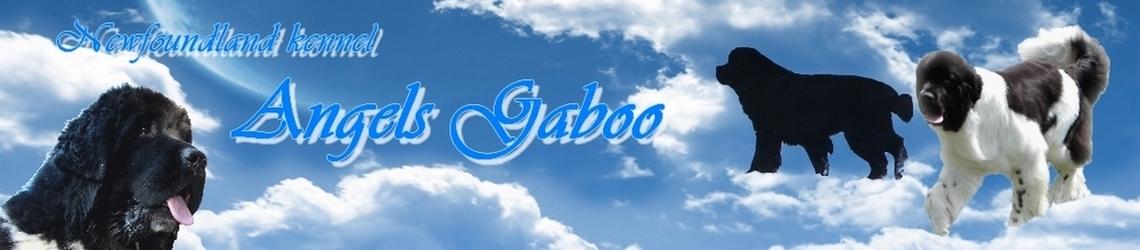 Chovatelská stanice Angels Gaboo :: Newfoundland kennel Angels Gaboo